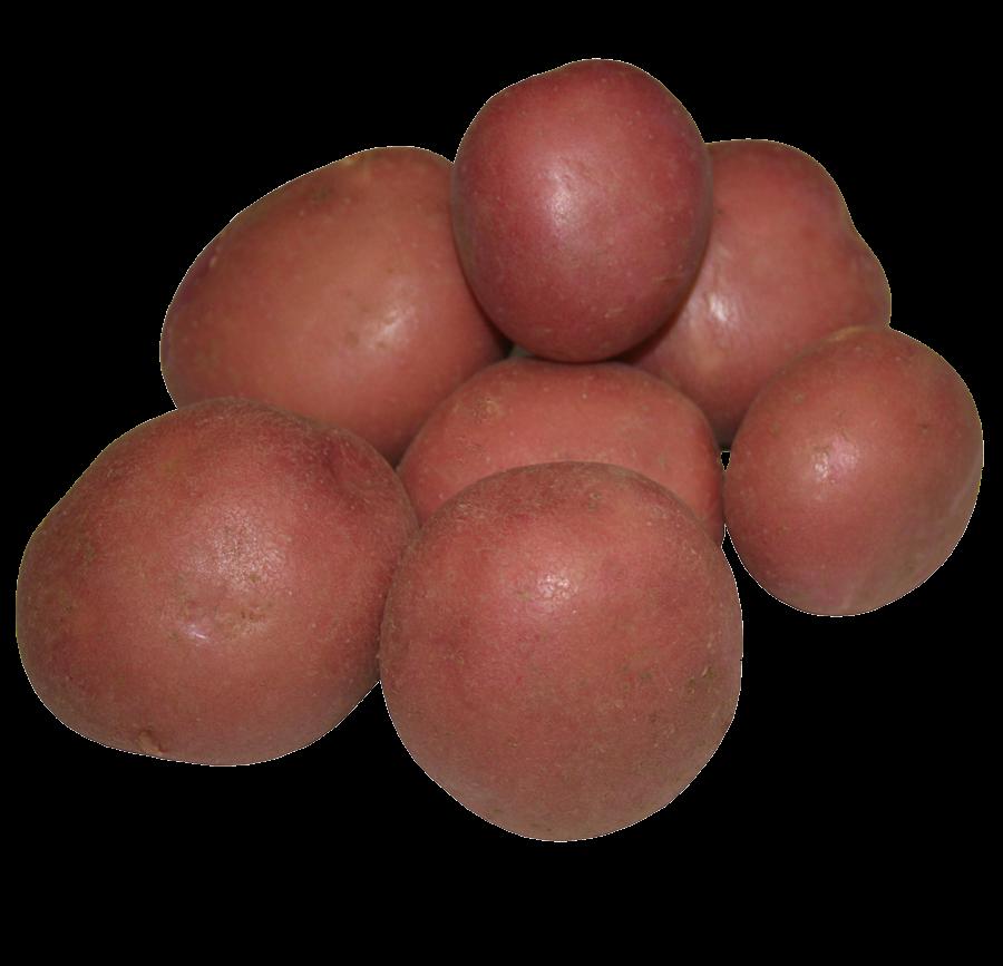 Image pomme de terre Mozart