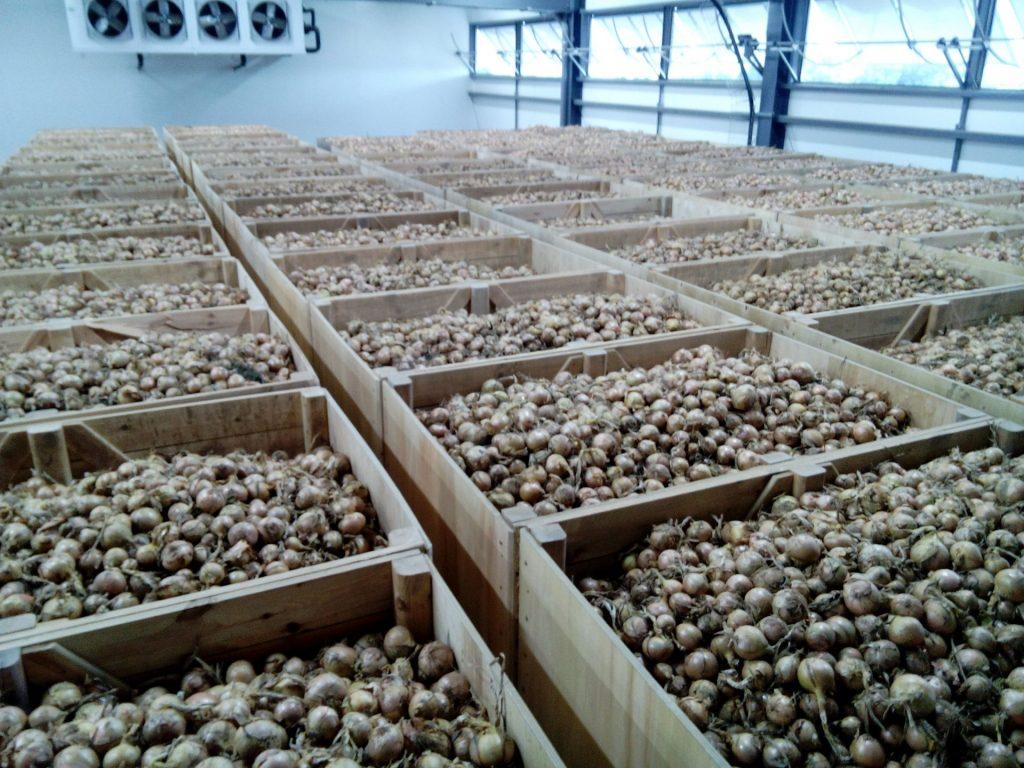 Stockage-oignons-bapaume -Stockage ferme de l'artois