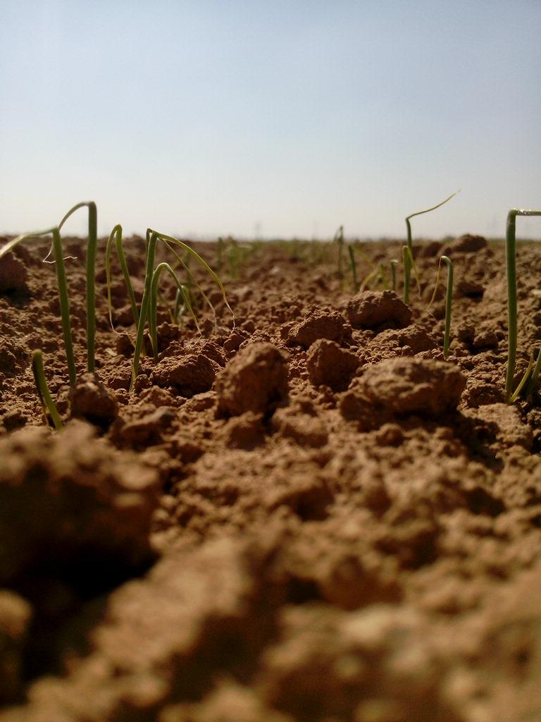 -Production des condiments de la terre